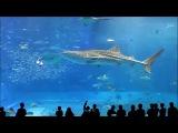 Восхитительно!!! Самый большой в мире бассейн.